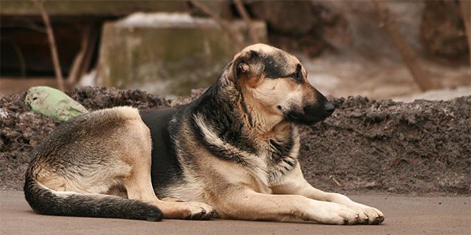 Azil za pse u Nišu