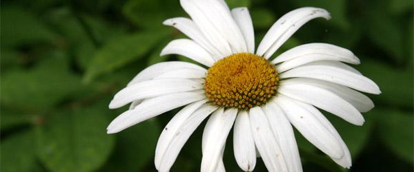 Sajam cveća u Nišu