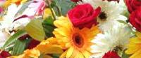 Sajam cveća i baštenske opreme