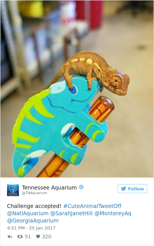 cute-zoo-animal-tweet-off-7