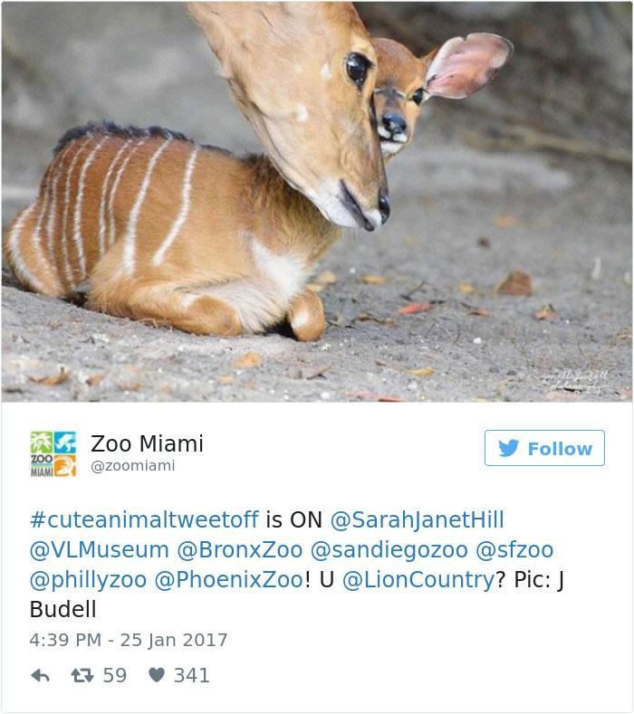 cute-zoo-animal-tweet-off-12