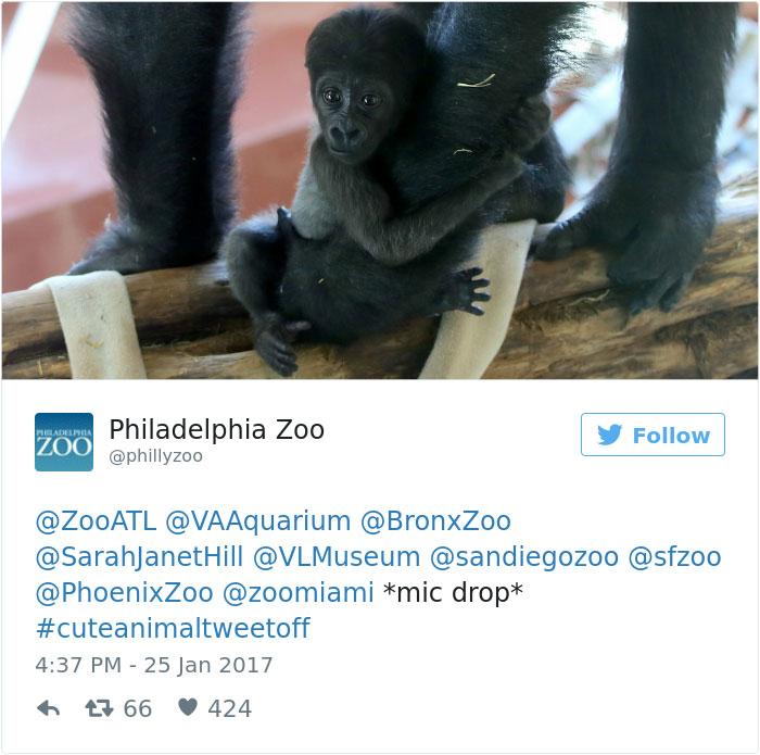 cute-zoo-animal-tweet-off-13