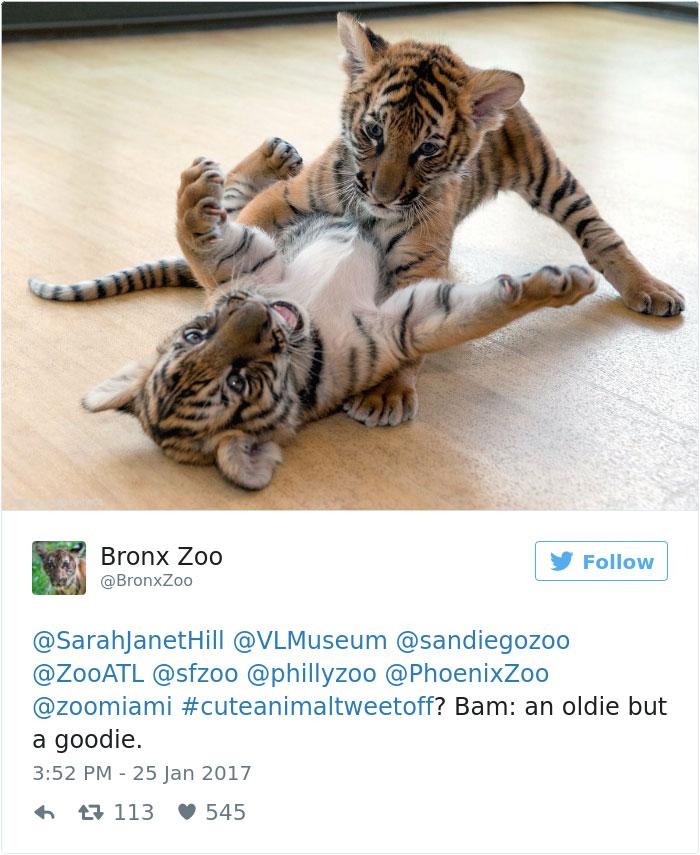 cute-zoo-animal-tweet-off-16