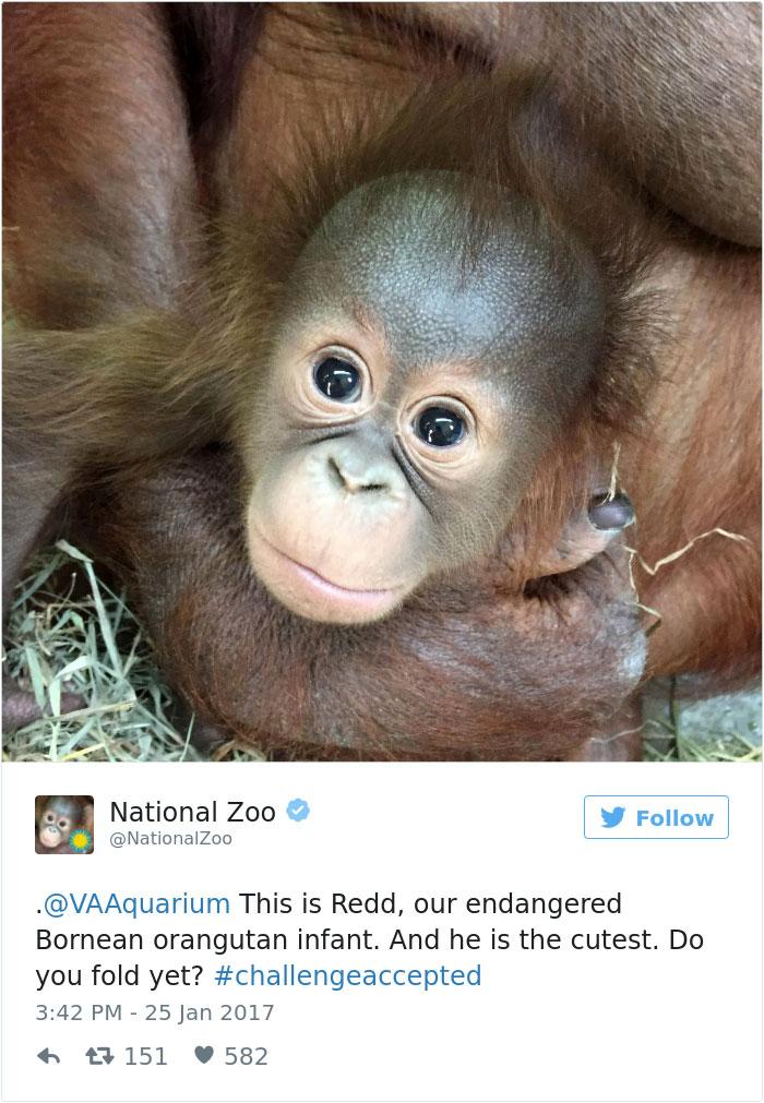 cute-zoo-animal-tweet-off-17