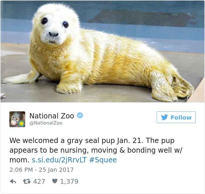 cute-zoo-animal-tweet-off-2