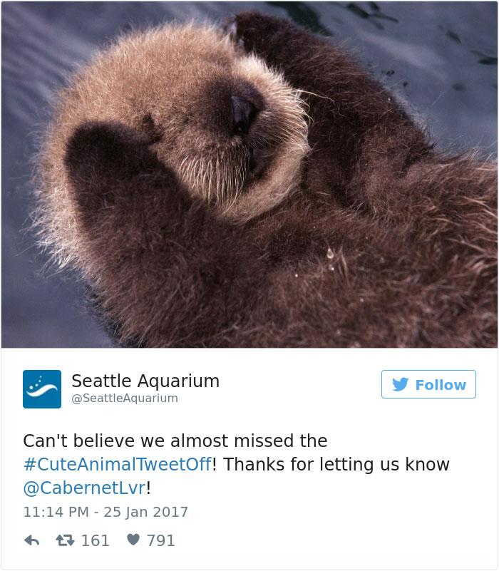 cute-zoo-animal-tweet-off-20