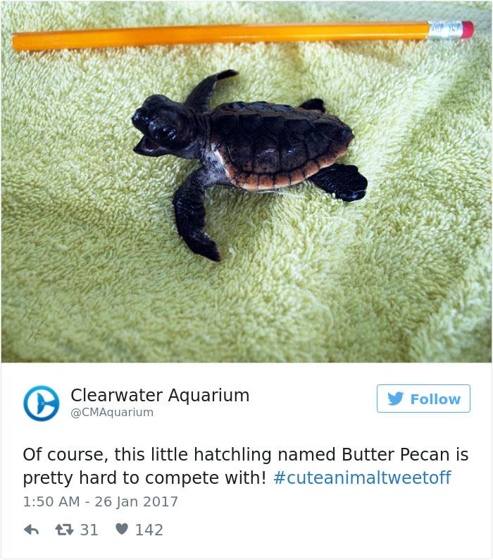 cute-zoo-animal-tweet-off-22