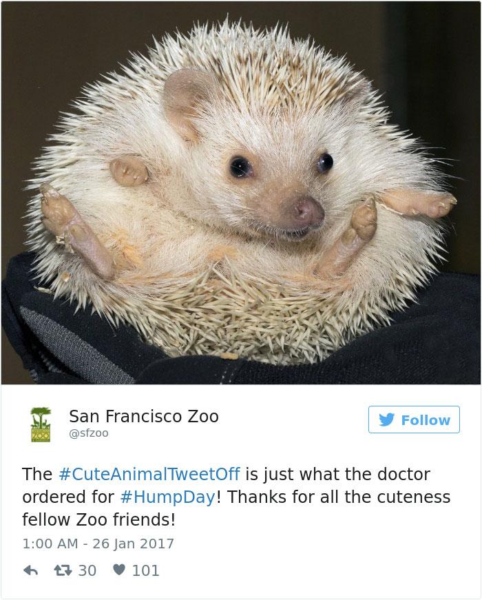 cute-zoo-animal-tweet-off-23