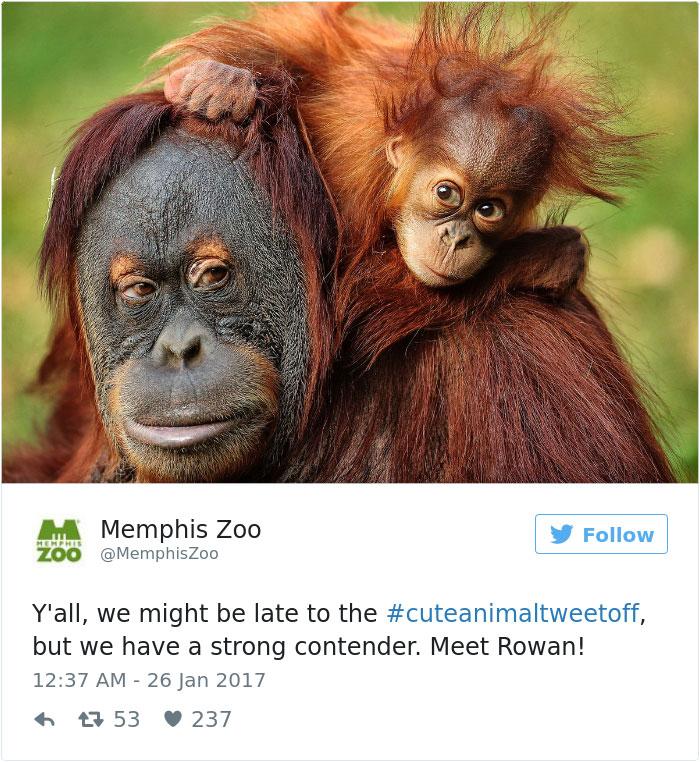 cute-zoo-animal-tweet-off-24