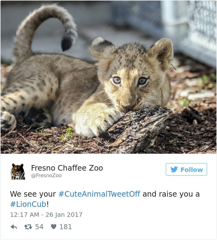 cute-zoo-animal-tweet-off-25