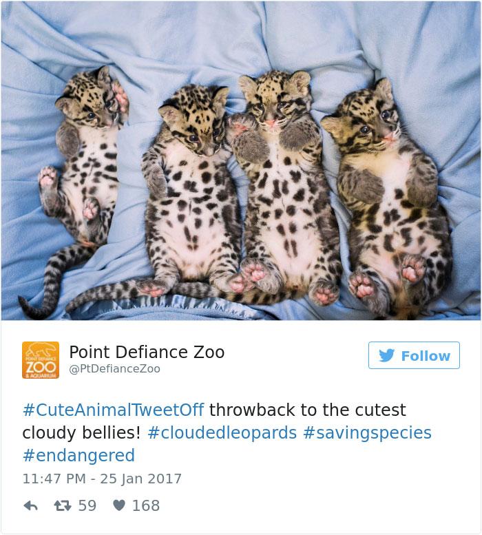 cute-zoo-animal-tweet-off-26