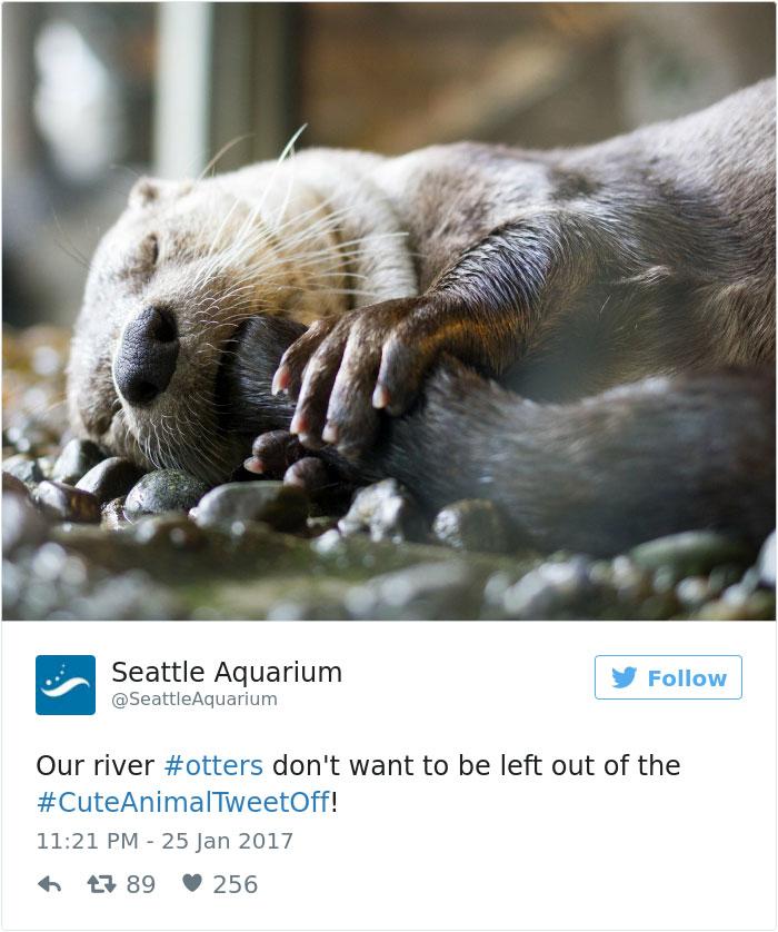 cute-zoo-animal-tweet-off-27