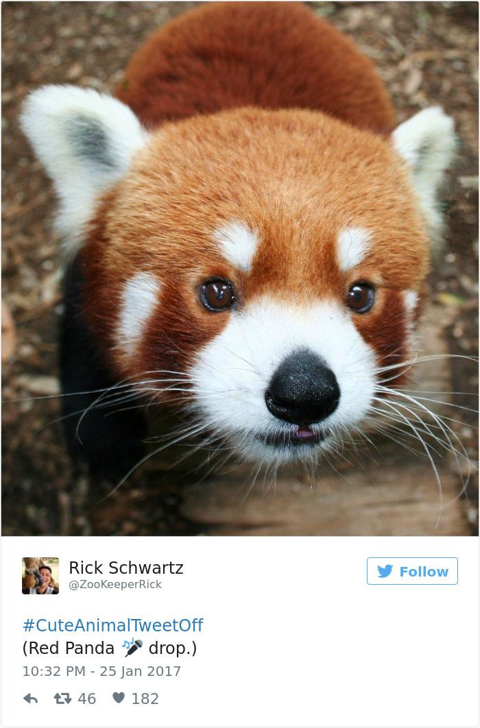 cute-zoo-animal-tweet-off-28