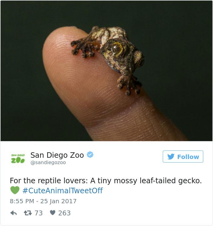 cute-zoo-animal-tweet-off-29