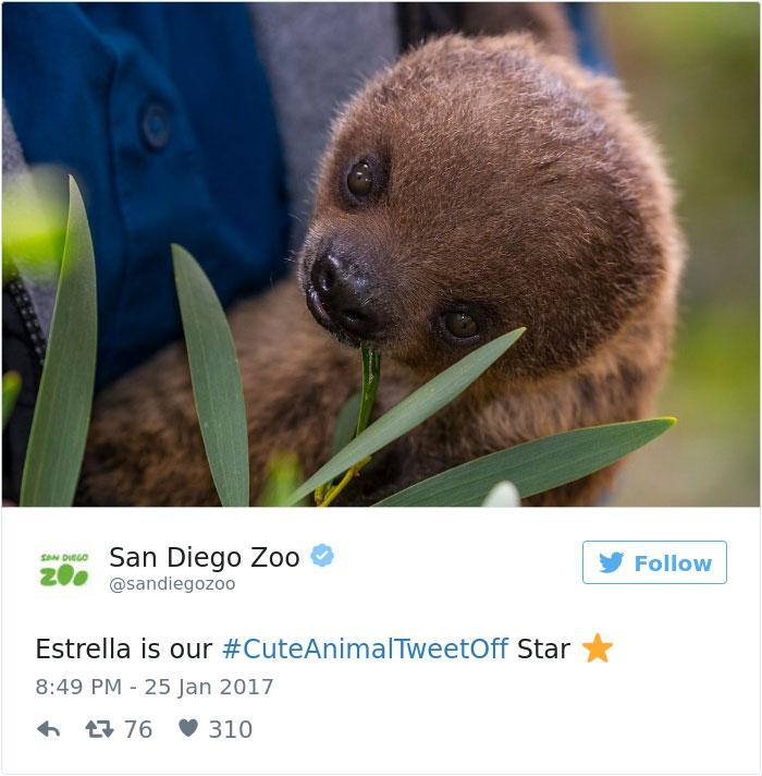 cute-zoo-animal-tweet-off-5