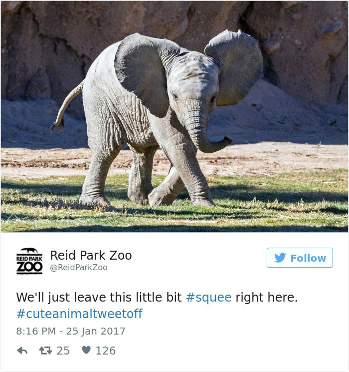 cute-zoo-animal-tweet-off-11