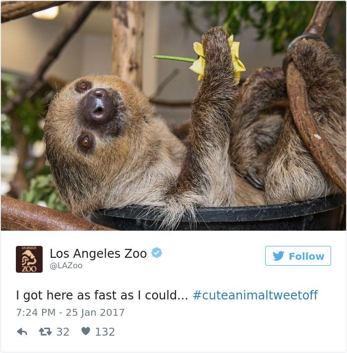 cute-zoo-animal-tweet-off-10