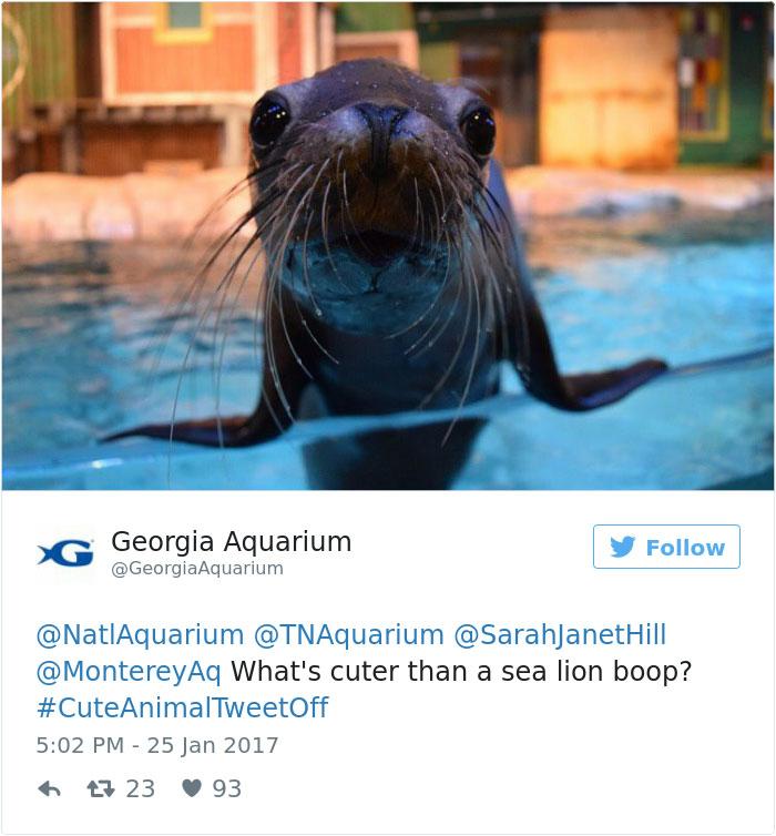 cute-zoo-animal-tweet-off-8