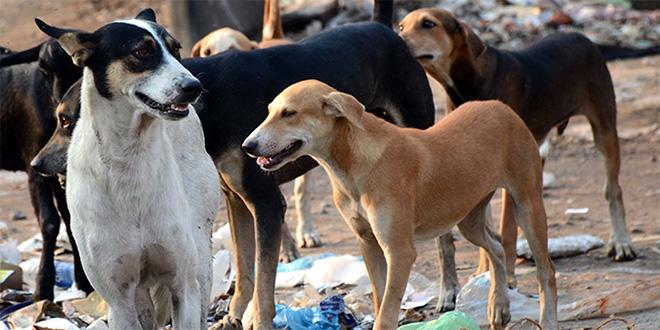 Niš odustao od iseljenja azila za pse