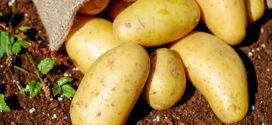 Krompir: Izvor energije, vitamina i minerala
