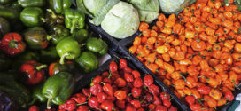 Podrška razvoju poslovanja prehrambenog sektora u Nišu